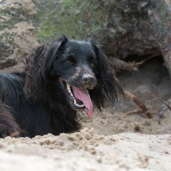 Markiesje in een kuil met een zandneus