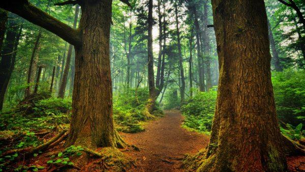 Pad slingerend door bos